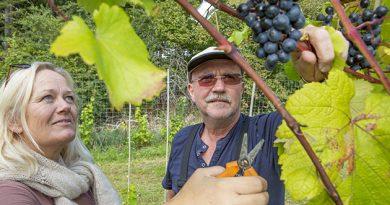 Vinfestival på Vesterhave
