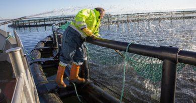 Høsttid på det økologiske havbrug